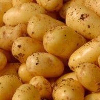 Aardappelen Charlotte 2.5kg