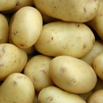 Aardappelen Nicola 2,5kg